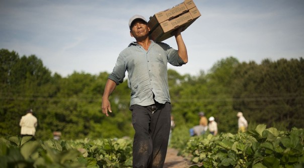 farmers-immigration
